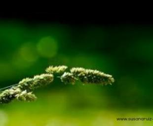 psicologos zaragoza. amor y cuidado